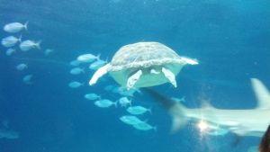Camden Aquarium 5