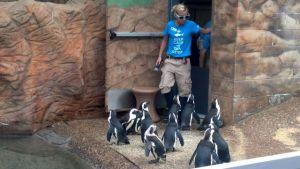 Camden Aquarium 6